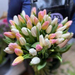 тюльпан 51