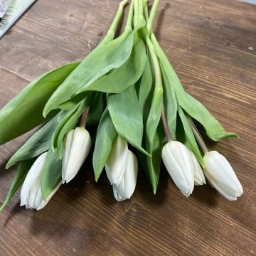тюльпан 7