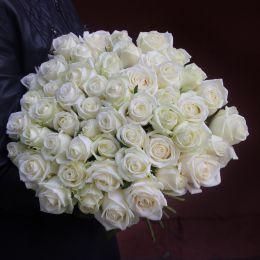 Роза белая 51